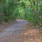 Oak hammock trail by Ben Waggoner