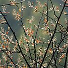 Nature abstracts calendar by Esther  Moliné