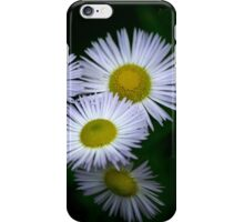 Fleabane Flowers iPhone Case/Skin
