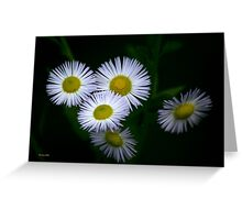 Fleabane Flowers Greeting Card