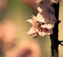 Spring by Giulio Menna