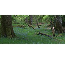 Ashness Woodland Photographic Print
