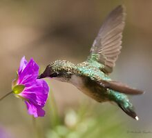 Ruby-thraoted Hummingbird On Geranium by Michaela Sagatova
