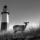 Montauk, Long Island by laurie13