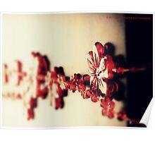 ACRYLIC LEI # 120 Poster