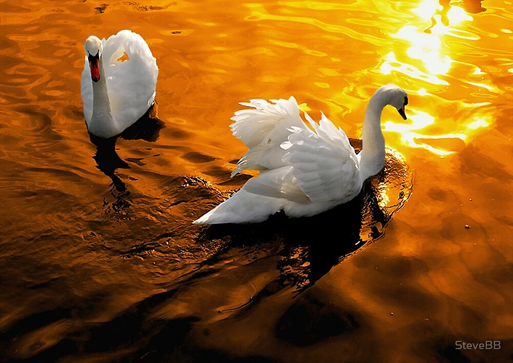 Golden Swanlight by SteveBB
