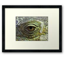 Eye to Scale Framed Print