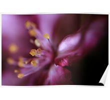 Crabapple Blossom Poster