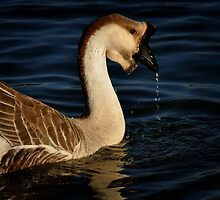 Brown Chinese Goose by lynell