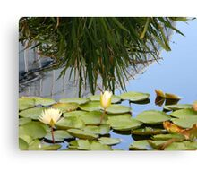 Lily pad with bush Canvas Print