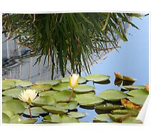 Lily pad with bush Poster