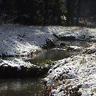 snowy Oregon forest, fox creek 10 by Dawna Morton