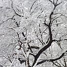 Spring Snow  by clizzio