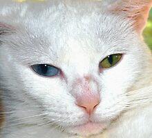 Beautiful companion by ?? B. Randi Bailey