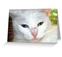 Beautiful companion Greeting Card