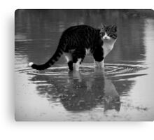 But you said there were fish?? Canvas Print