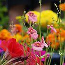 Colourful Garden by fixtape