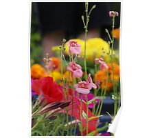 Colourful Garden Poster