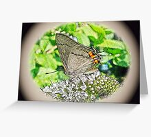 Digital Butterfly - Gray Hairstreak Greeting Card