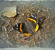 Digital Butterfly - Red Admiral by MotherNature