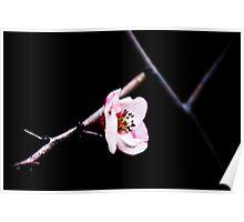 Pink Flower - Dark Background Poster