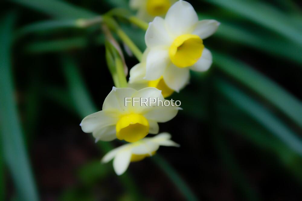 Dreamy Yellow Flowers - Arboretum by FFRPhoto