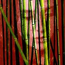 Behind the Bamboo by Marlies Odehnal
