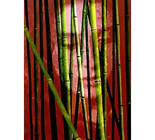 Behind the Bamboo Photographic Print