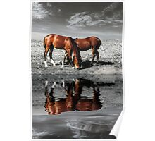 Grazing horses at sunset near water Poster