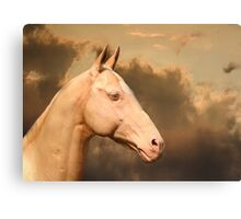 Achal-Teke horse Canvas Print