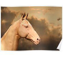 Achal-Teke horse Poster