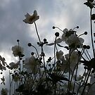 Wind Flowers in the Breeze by DEB CAMERON
