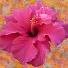 Hibiscus Fusion by Fay Hartwell