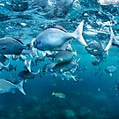 Feeding Frenzy HDR by Flux Photography