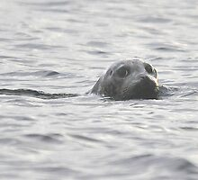 Seal of Disapproval by Carl Olsen