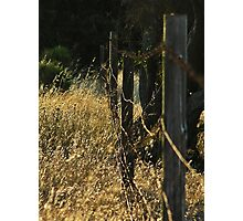Fenceline Photographic Print