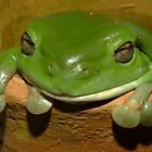 Froggy Pot! by Gabrielle  Lees