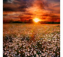 Daisies field Photographic Print