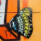 Butterfly Works by LJ_©BlaKbird Photography