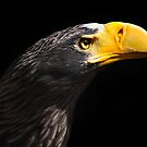 Stellar's Sea Eagle by Bobby McLeod
