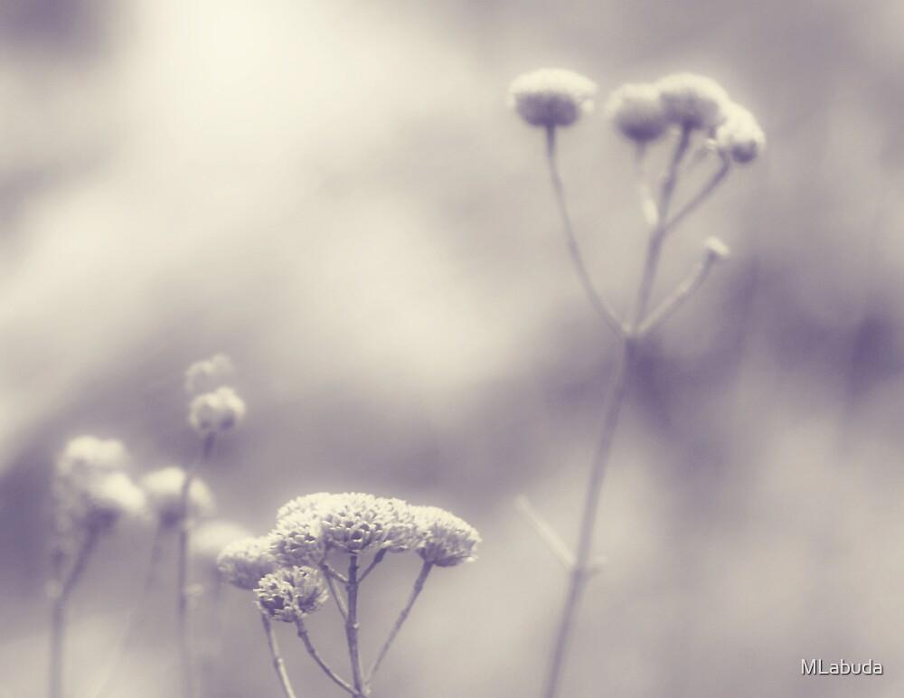 Memories - Lou Campbell Nature Preserve by Mitch Labuda