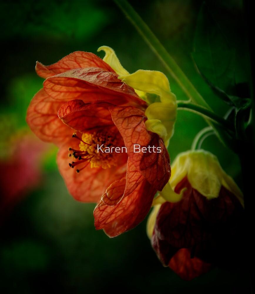 Flower by Karen  Betts