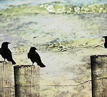Three Little Birds by bcboscia410