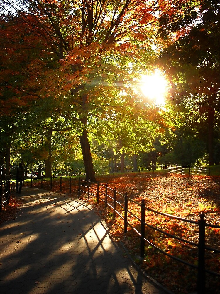 Autumn Sun in Central Park, New York City by Vivienne Gucwa