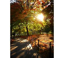 Autumn Sun in Central Park, New York City Photographic Print
