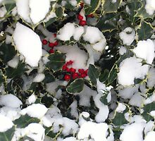 Snow on Berrys by puddingpiesjb