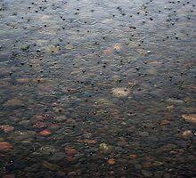 Harbor Drops by Karen Karl