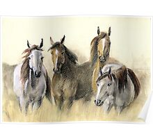 Pastel drawing of horse Poster