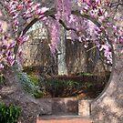 Chinese Moongate Garden by Matsumoto