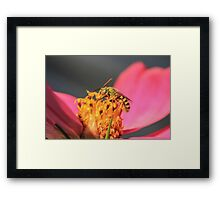 Green Emerald Eyes Framed Print